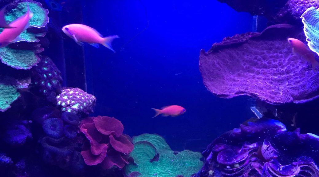 aquarium bassin d'arcachon